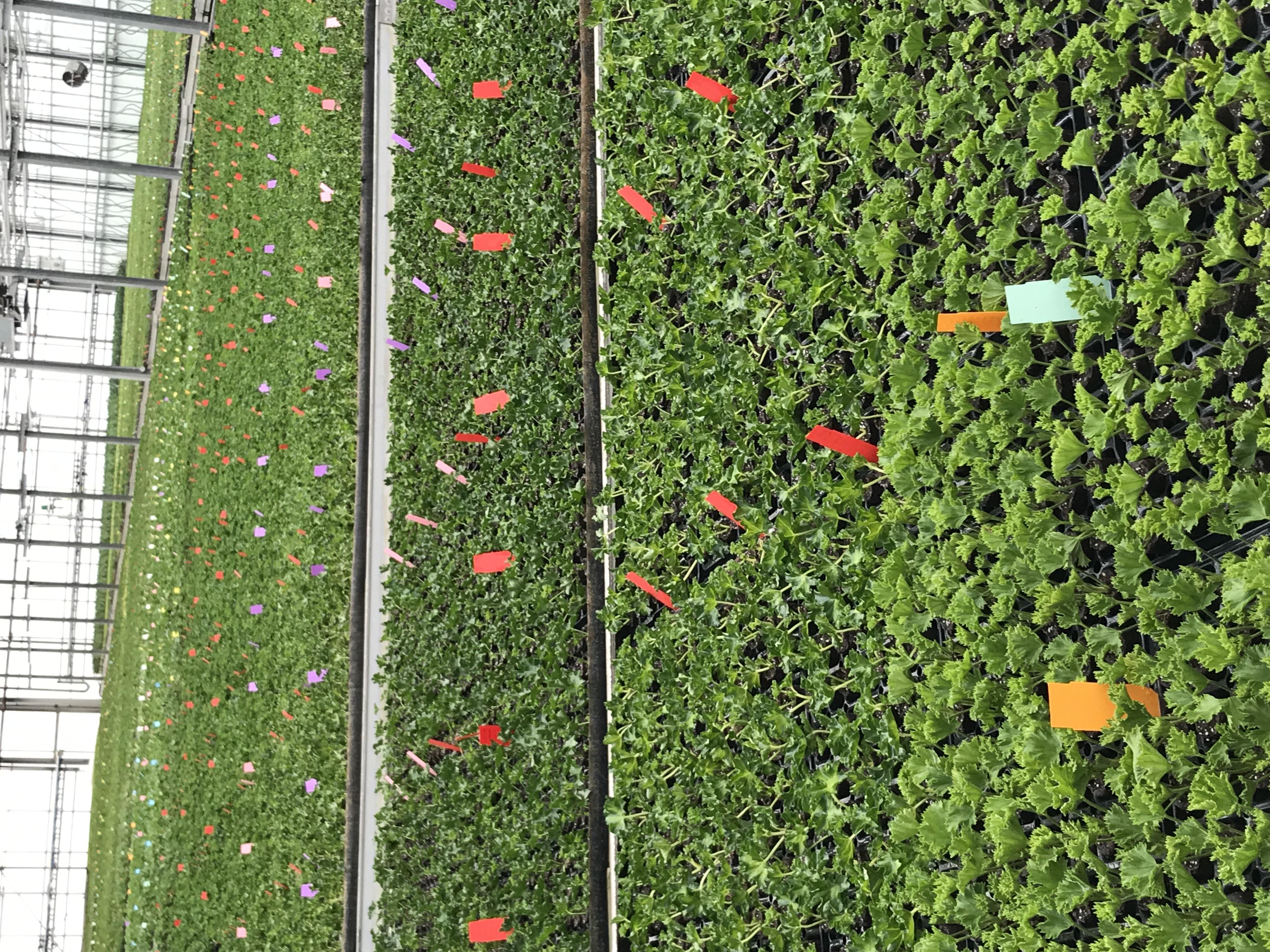 plants de fleurs EYRAUD PRODUCTIONS accompagnement Expertise RH