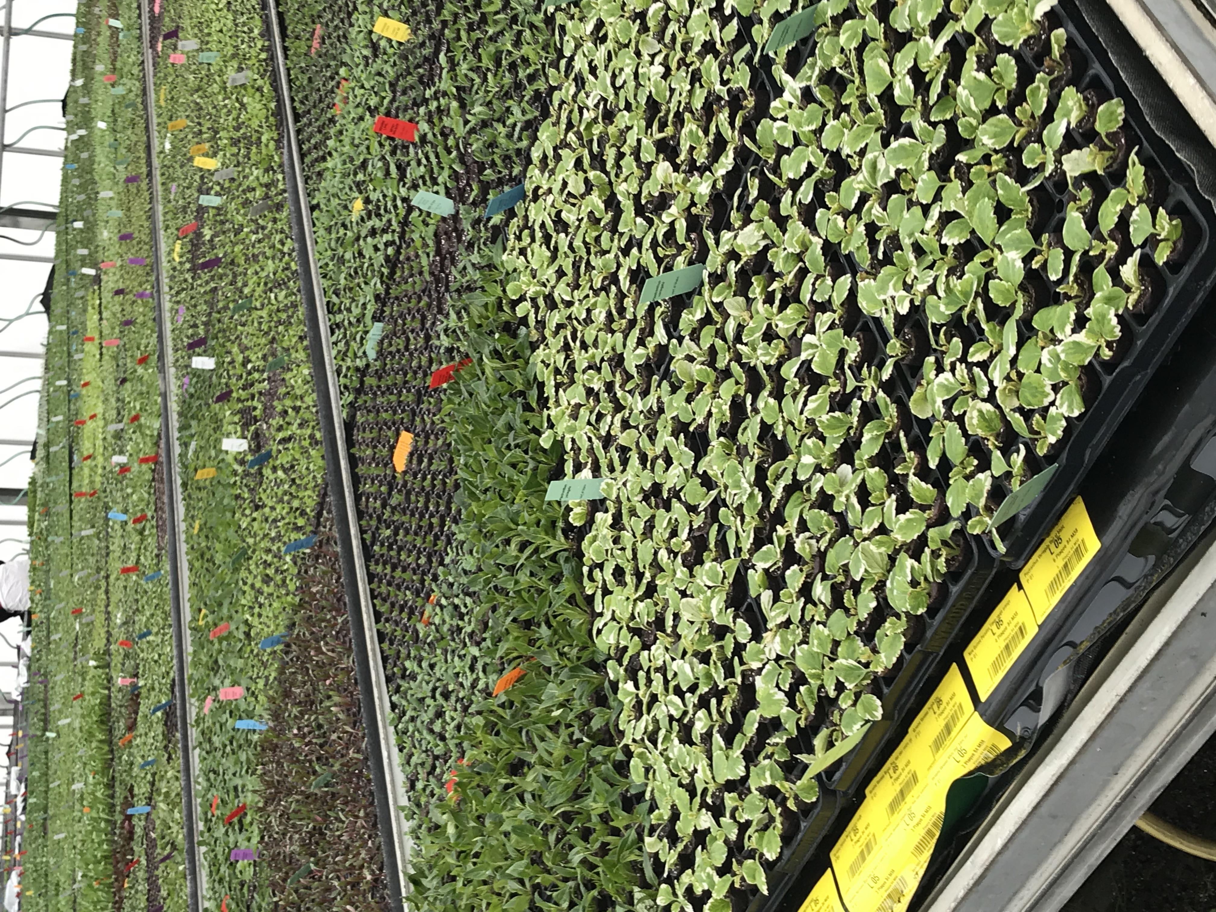 Plants de fleurs EYRAUD Productions Accompagnement expertise RH Conseil RH